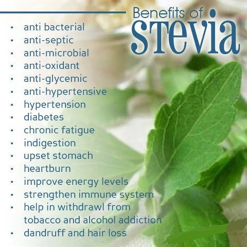 stevia-benefit